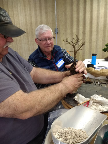 Carl_and_Lee_-_working_on_Carl's_Chinese_elm_root_over_rock