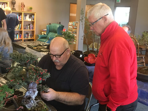 Lee_and_Carl_working_on_Carl's_beautiful_Cotoneaster